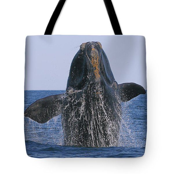 North Atlantic Right Whale Breaching Tote Bag