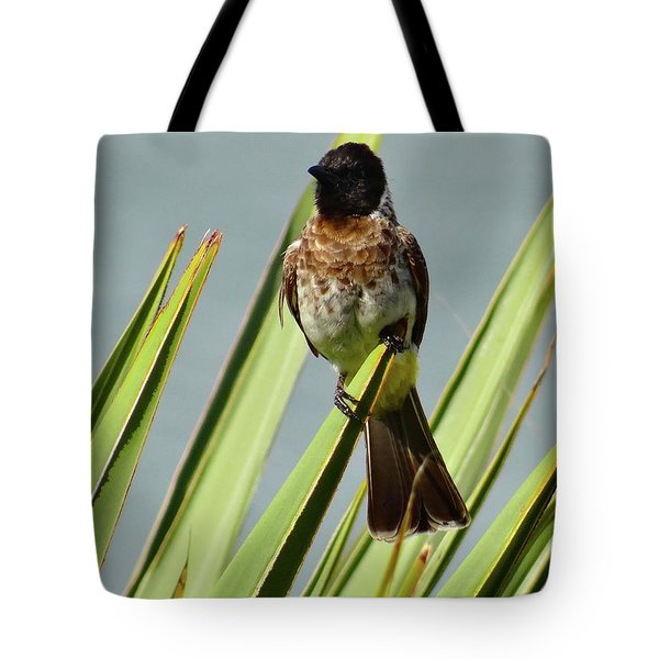 North - Eastern African Home - Close Up Yellow And Black Bird 3 Tote Bag