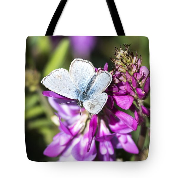 Northern Blue Butterfly Tote Bag
