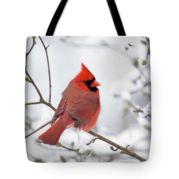 Northern Cardinal - D001540 Tote Bag by Daniel Dempster