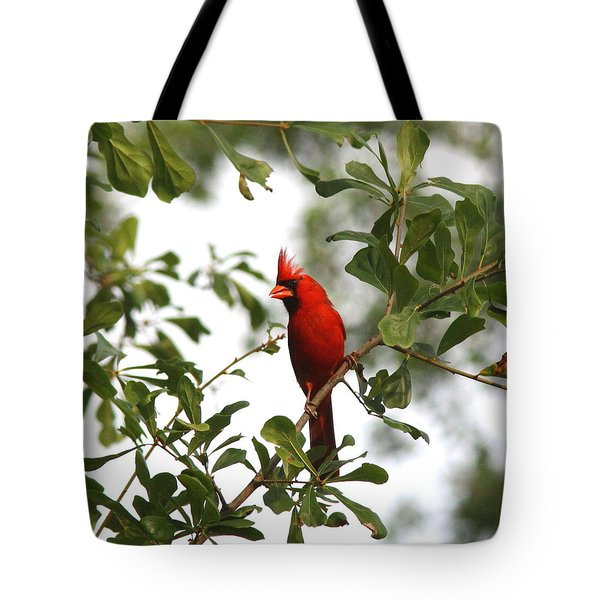 Northern Cardinal - In The Wind Tote Bag by Travis Truelove