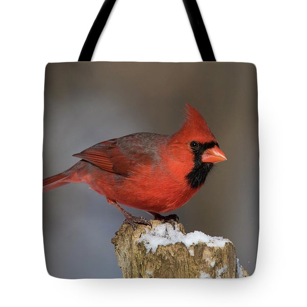 Tote Bag featuring the photograph Northern Cardinal In Winter by Mircea Costina Photography
