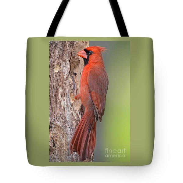 Northern Cardinal Male Tote Bag