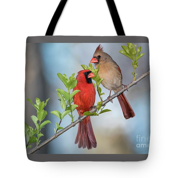 Northern Cardinal Pair In Spring Tote Bag