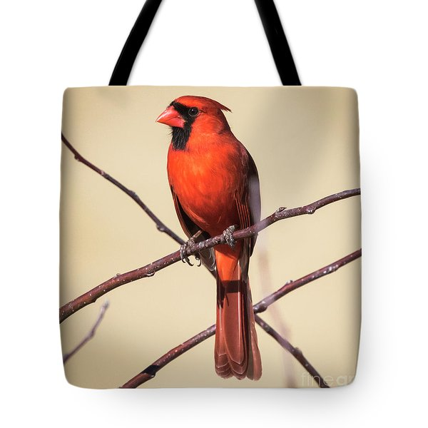 Northern Cardinal Profile Tote Bag by Ricky L Jones