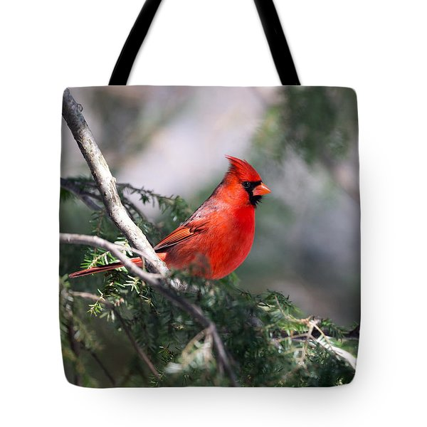 Northern Cardinal Red Tote Bag