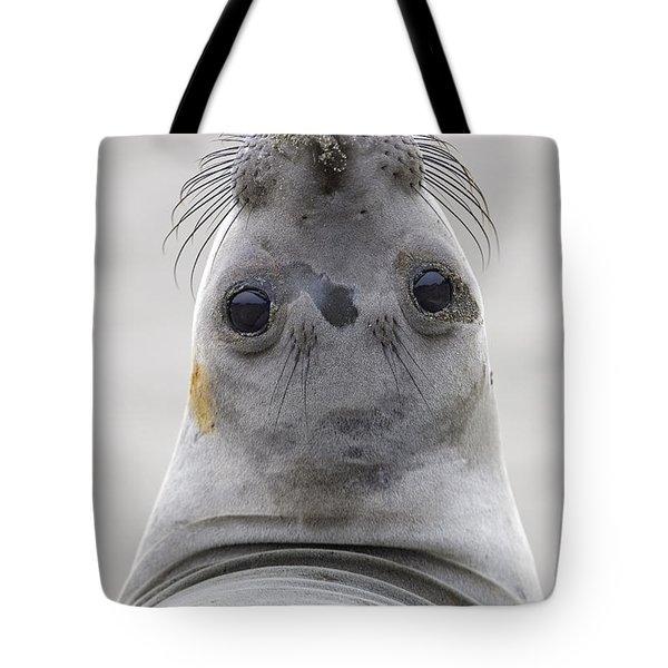 Northern Elephant Seal Looking Back Tote Bag by Ingo Arndt