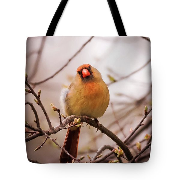 Northern Female Cardinal Pose Tote Bag by Terry DeLuco