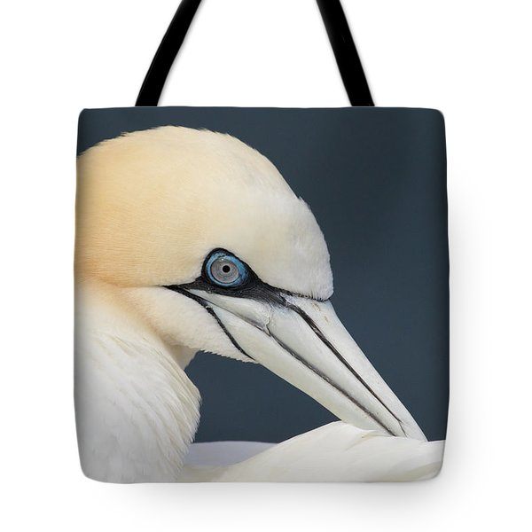 Tote Bag featuring the photograph Northern Gannet At Troup Head - Scotland by Karen Van Der Zijden