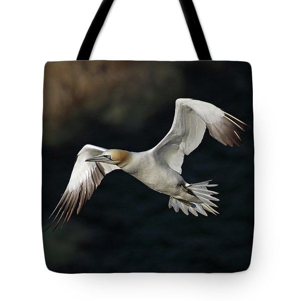 Northern Gannet In Flight Tote Bag by Grant Glendinning
