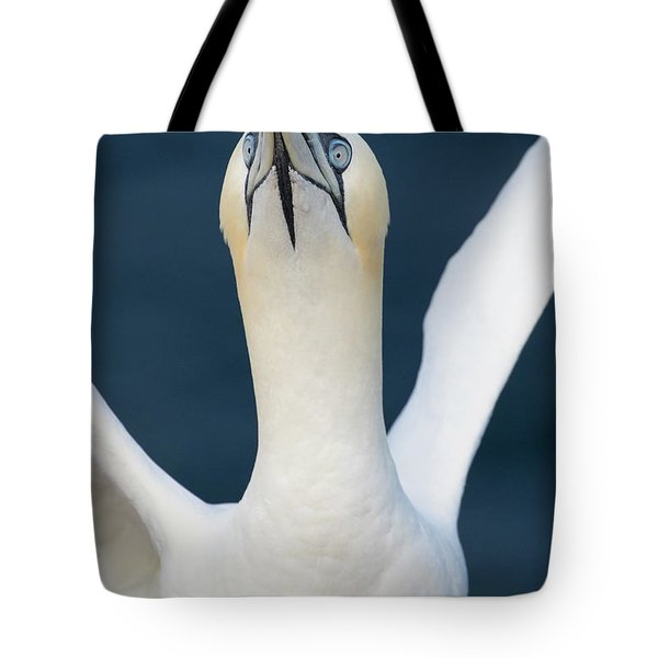 Tote Bag featuring the photograph Northern Gannet Stretching Its Wings by Karen Van Der Zijden