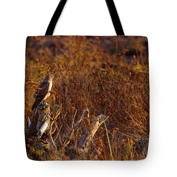 Tote Bag featuring the photograph Northern Harrier At Sunset by Sharon Talson
