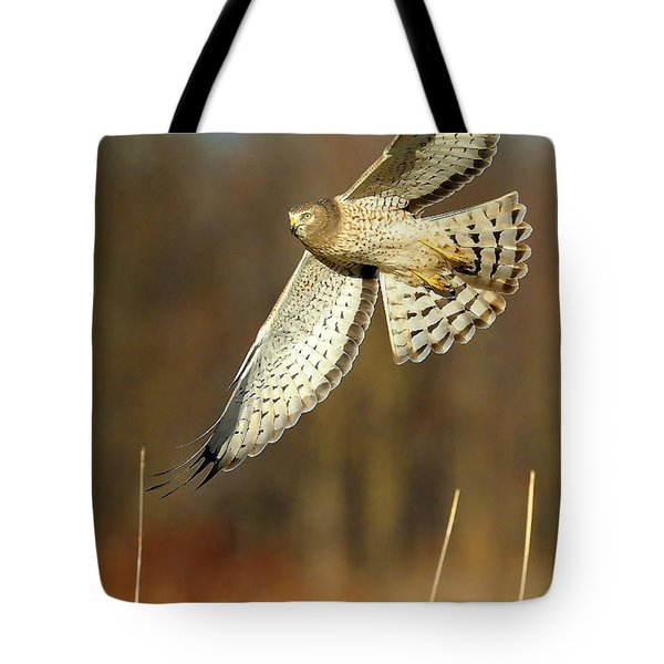 Northern Harrier Banking Tote Bag