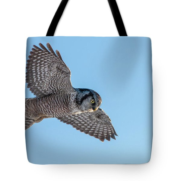 Tote Bag featuring the photograph Northern Hawk Owl Hunting by Mircea Costina Photography