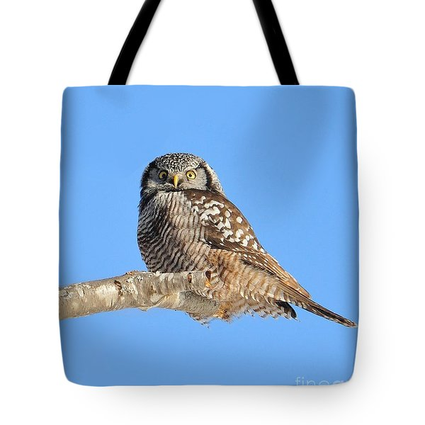 Northern Hawk-owl On Limb Tote Bag