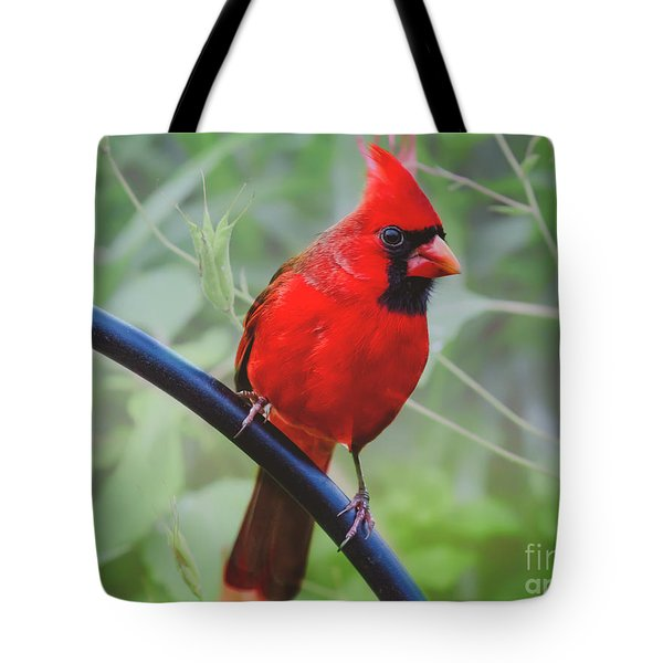 Northern Male Red Cardinal Bird Tote Bag