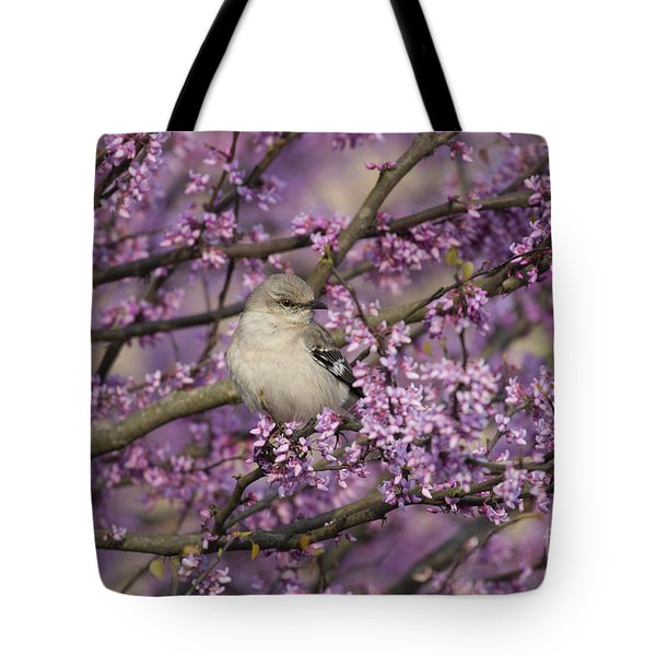 Northern Mockingbird In Blooming Redbud Tree Tote Bag by Nature Scapes Fine Art