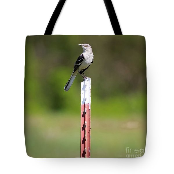Tote Bag featuring the photograph Northern Mockingbird Posing  by Ricky L Jones