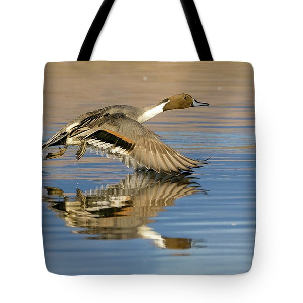 Northern Pintail With Reflection Tote Bag