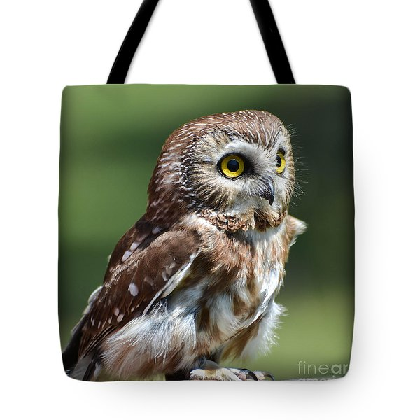 Northern Saw Whet Owl Tote Bag by Amy Porter