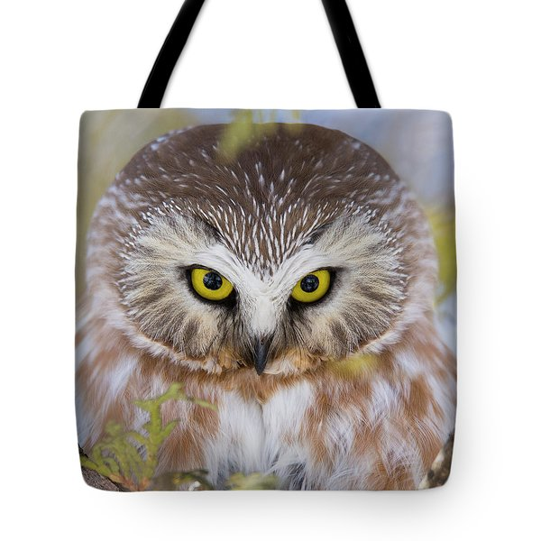 Tote Bag featuring the photograph Northern Saw-whet Owl Portrait by Mircea Costina Photography