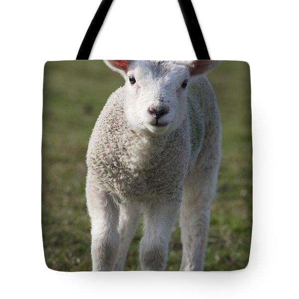 Northumberland, England A White Lamb Tote Bag
