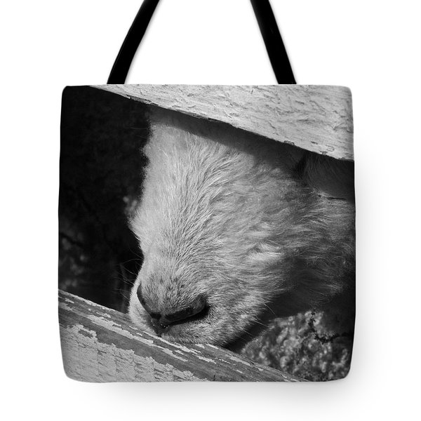 Nosing Around Tote Bag
