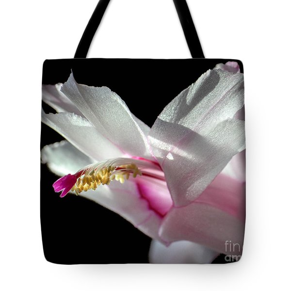 November Splendor Tote Bag by Amy Porter