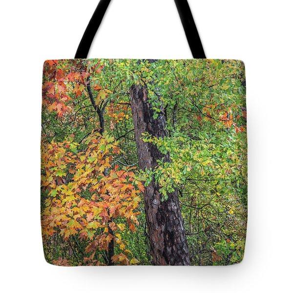 Oak Hickory Woodland Tote Bag by Tim Fitzharris