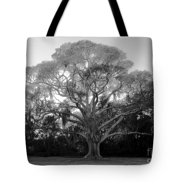 Oak Tree Tote Bag by David Lee Thompson