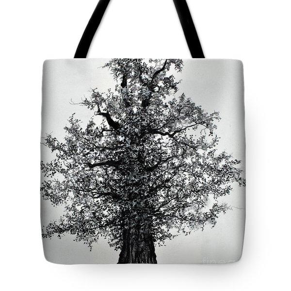 Oak Tree Tote Bag by Maja Sokolowska