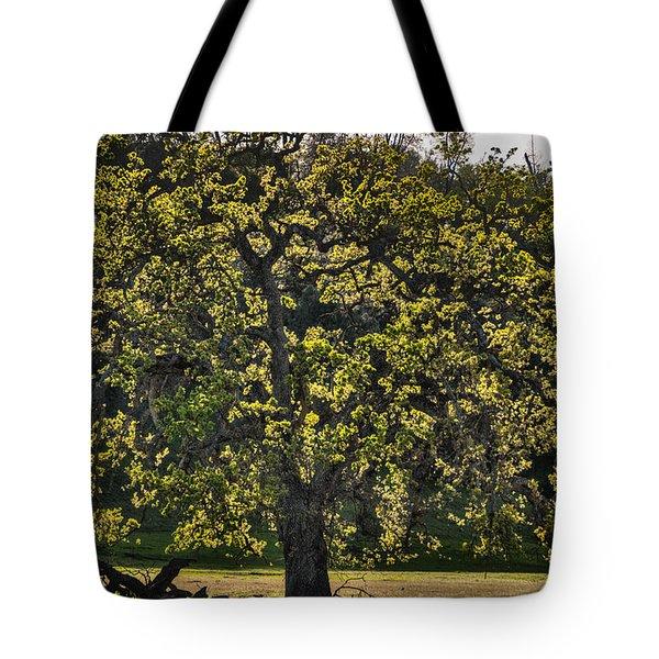 Oak Tree New Green Leaves Tote Bag