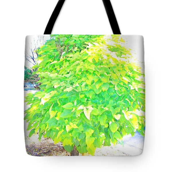 Tote Bag featuring the photograph Obese American Tree by Lenore Senior