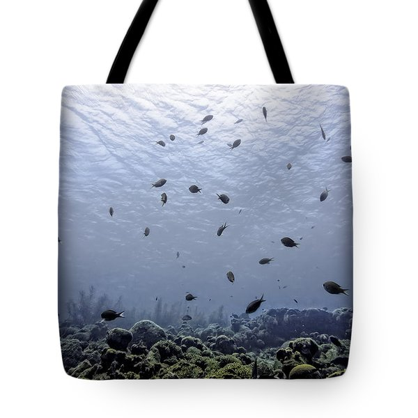 Tote Bag featuring the photograph Ocean Light by Perla Copernik
