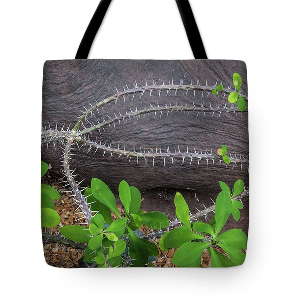 Tote Bag featuring the photograph Ocotillo In Leaf by Lon Dittrick
