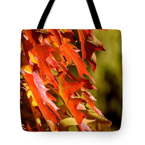 October Oak Leaves Tote Bag by Brian Chase