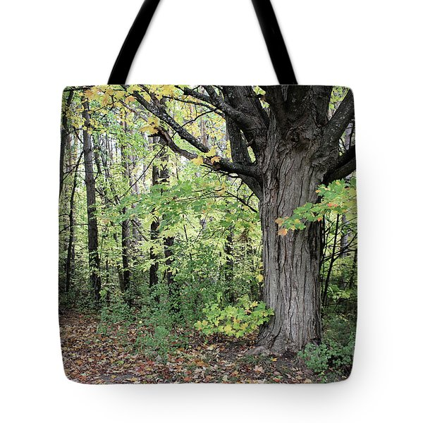 October Trees Tote Bag