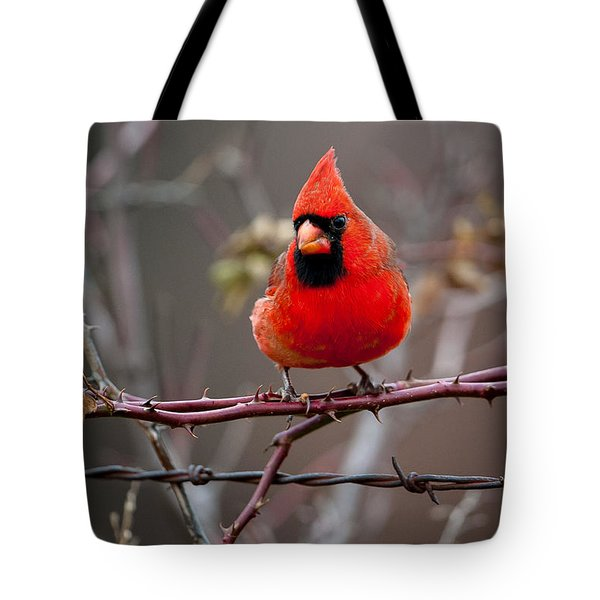 Of Barbs And Thorns Tote Bag
