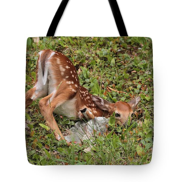 Tote Bag featuring the photograph Oh Deer Little Fawn by Debbie Stahre