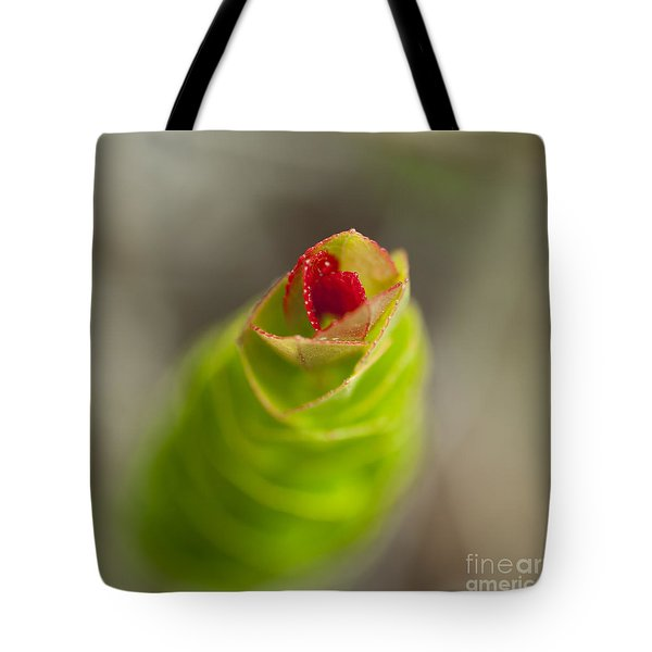 Tote Bag featuring the photograph Ohelo Berry Plant by Charmian Vistaunet