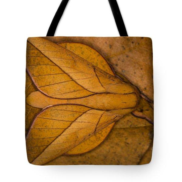 Oiticella Convergens Moth Tote Bag by Gabor Pozsgai