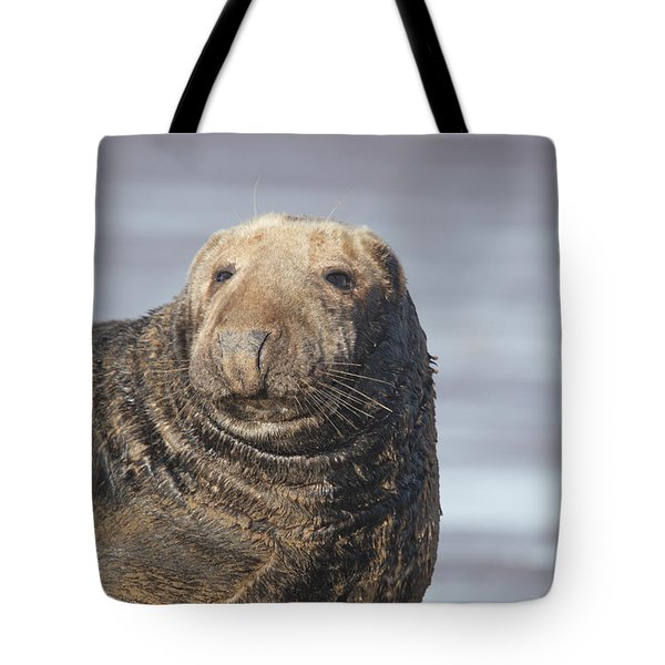 Old Atlantic Grey Seal On The Beach Tote Bag