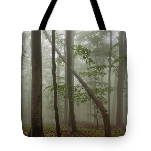 Old Beech Forest Tote Bag by Evgeni Dinev