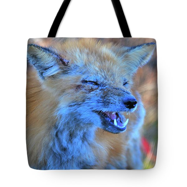 Tote Bag featuring the photograph Old Fox by Debbie Stahre