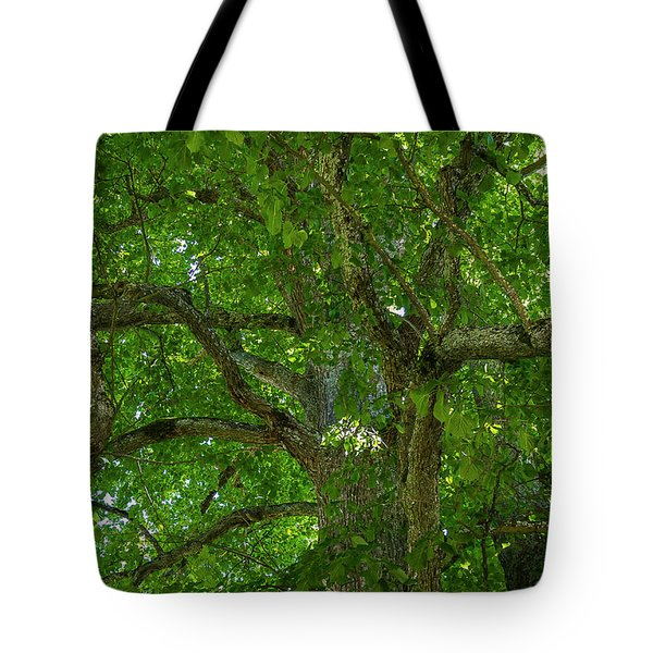 Old Linden Tree. Tote Bag by Ulrich Burkhalter