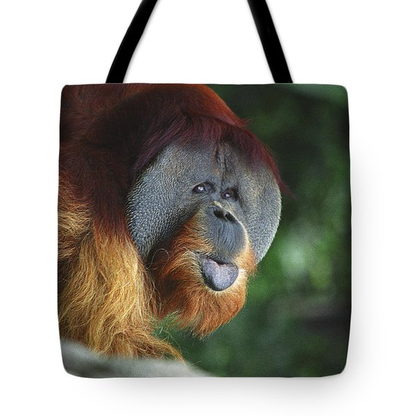 Old Man Of The Forest Tote Bag by Greg Slocum