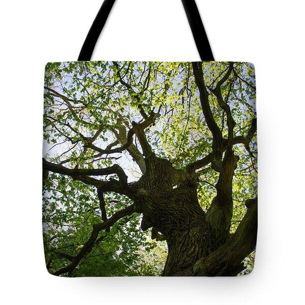 Old Oak Tree Tote Bag by Kennerth and Birgitta Kullman