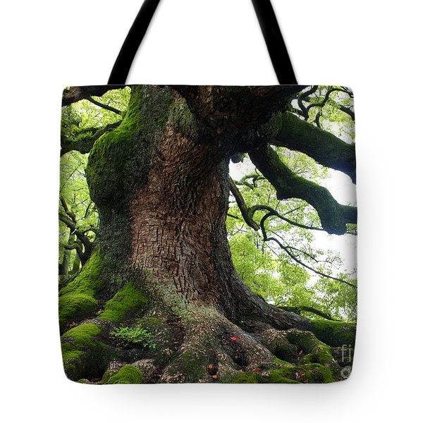 Old Tree In Kyoto Tote Bag by Carol Groenen