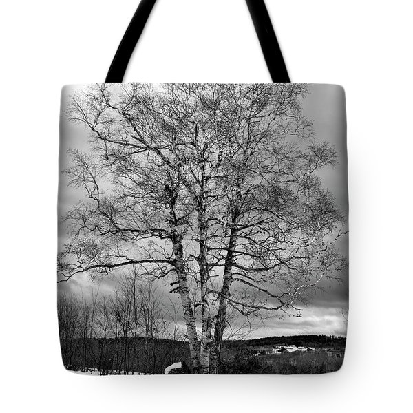 Old White Birch Tote Bag