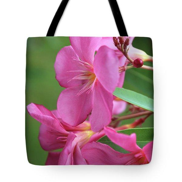 Oleander Maresciallo Graziani 2 Tote Bag